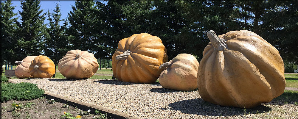 Smoky Lake Pumpkin Park