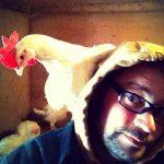 chickens6